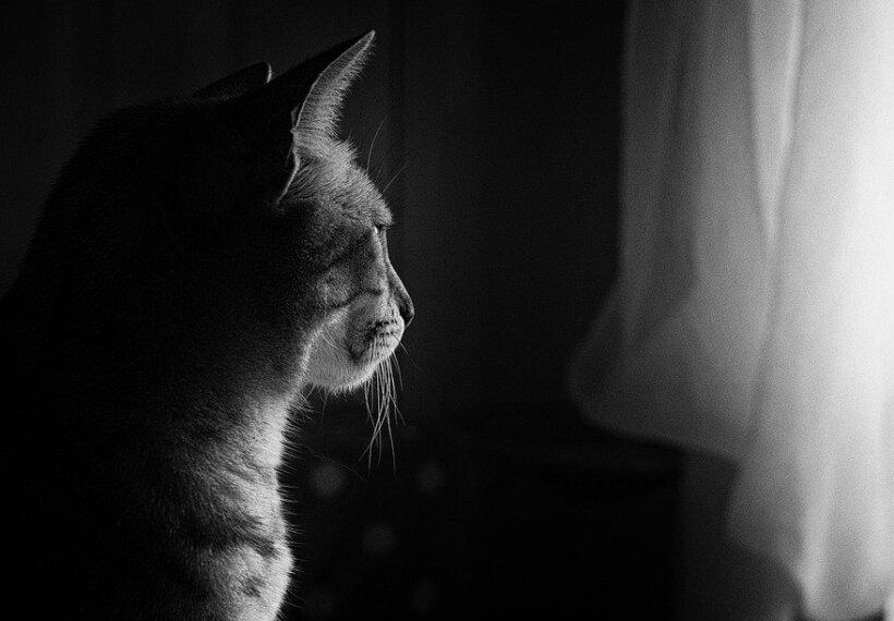 【ペット】飼い猫の不機嫌はトイレが原因。目から鱗とはまさにこのこと。